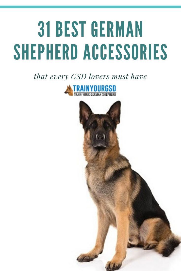 31 Best German Shepherd Accessories For Every Gsd Lover Auto