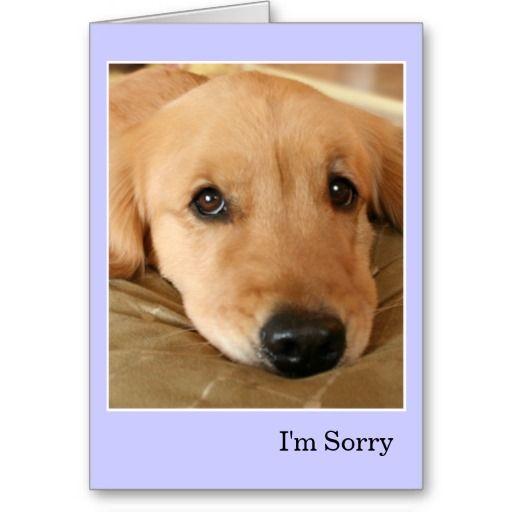 Golden Retriever I'm Sorry Apology Card | Zazzle com | Golden