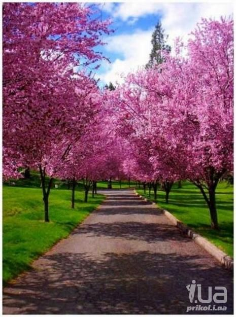 42 best Весна images on Pinterest   Landscape, Scenery and Album