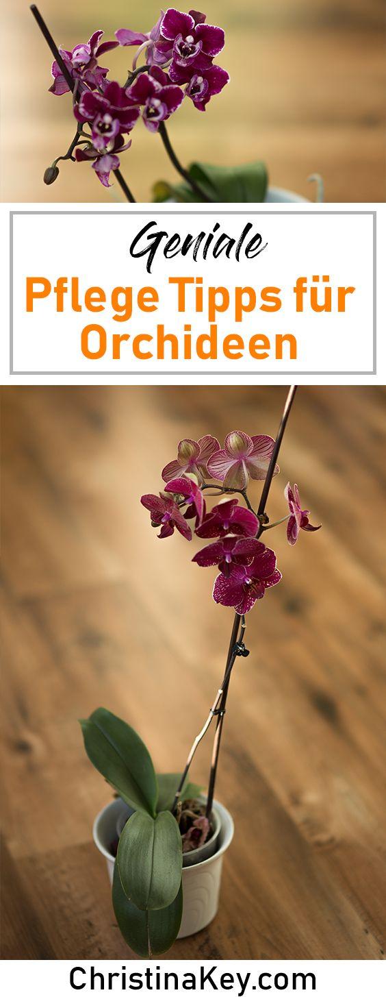Orchideen Pflege Tipps