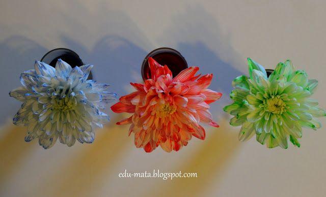 edu-mata, barwienie kwiatów, Dyeing of flowers, zabawy z dziećmi, w co się bawić, eksperymenty z dziećmi,