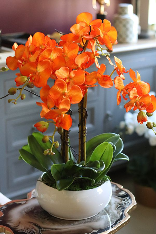 Camilla Pomaranczowa Extra Storczyk W Bialej Donicy Wys 55cm Imagens De Flores Lindas Orquideas Arranjos De Flores Modernos