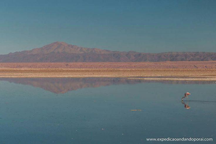 Laguna Chaxa em San Pedro de Atacama no Chile