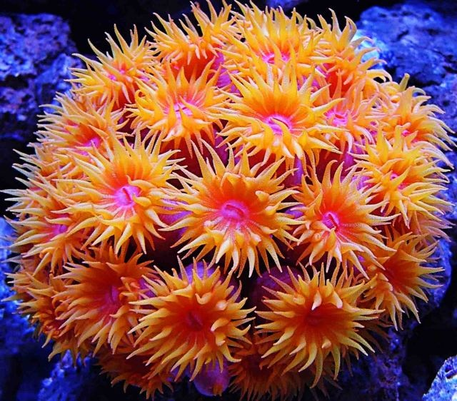 I want to deep sea dive and discover the Beautiful Sun Coral and new species.