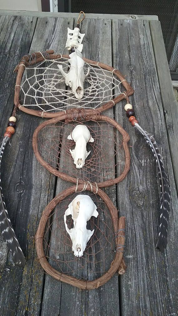 Raccoon Skull Coyote Bone DreamcatcherTribal