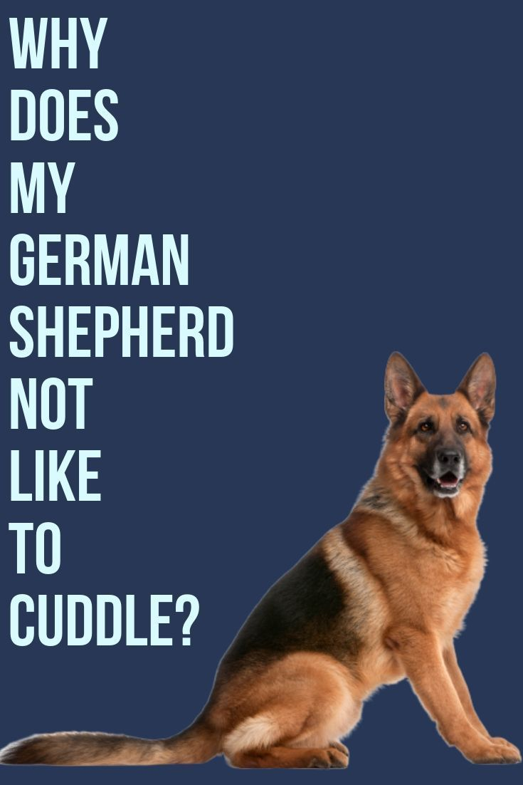 This Post Will Show You Why Your German Shepherd Doesn T Like To