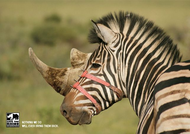 """""""Nothing we do will ever bring them back"""". Save the Rhino by Stick. #Endangered #species #zebra #rhino"""