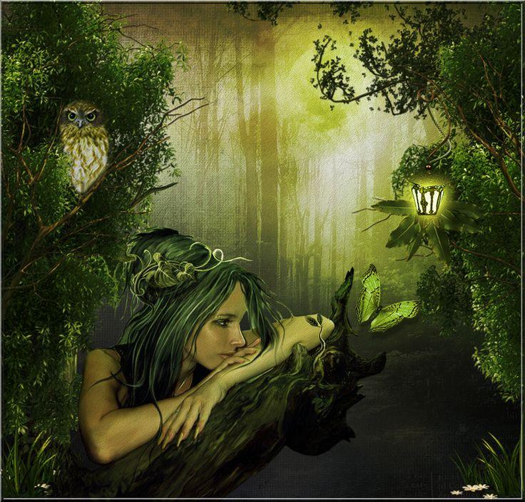 Вечер в волшебном лесу