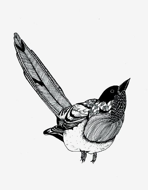 An illustrated guide to British birds - Chrysa Koukoura Illustration