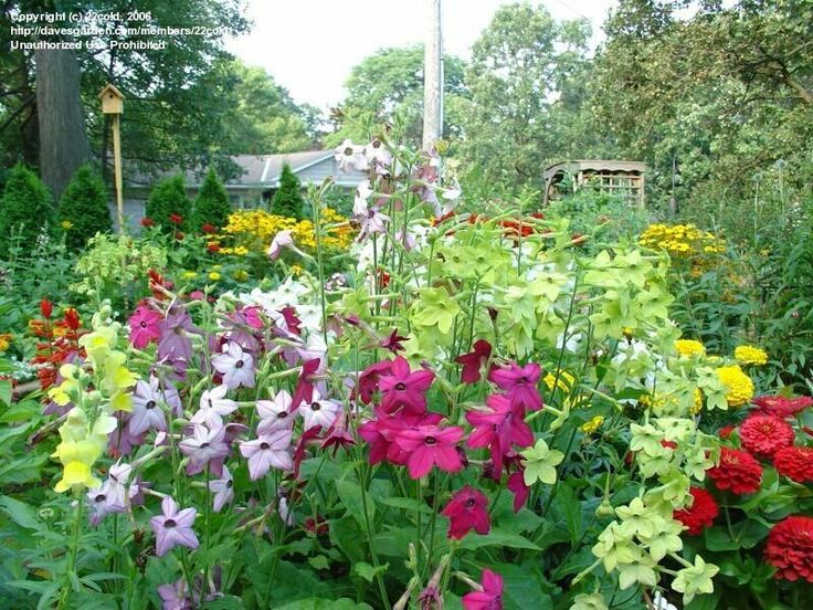 Taman Bunga Agro Magromulyo Warna Warni Aneka Bunga Yang Indah Di Kediri Jawa Timur Taman Bunga Taman Bunga