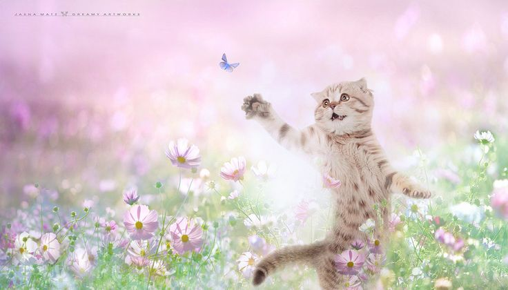 ~ Catch me, if you can ~ by Jasna Matz Фотографии от пользователя jmatz на Fivehundredpx