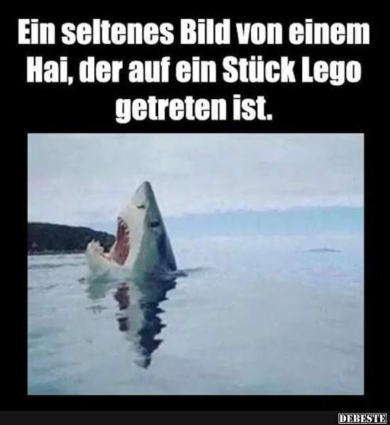 Ein seltenes Bild von einem Hai, der auf ein Stück Lego..
