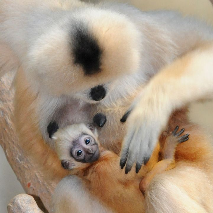 The 29 Most Unbelievably Adorable Baby Monkeys In The