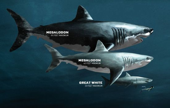 Since first appearing at least 420 million years ago, sharks have undergone many strange and sometimes terrifying changes to evolve into the sharks we know today.
