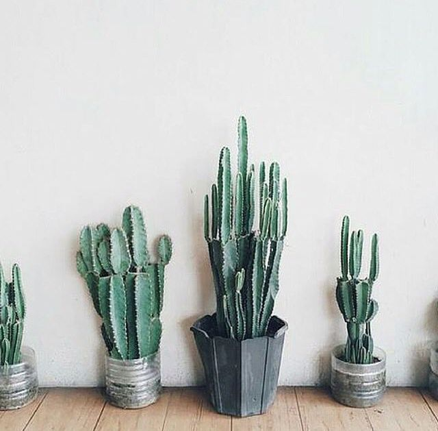 1000 Ideas About Indoor Cactus On Pinterest Woven
