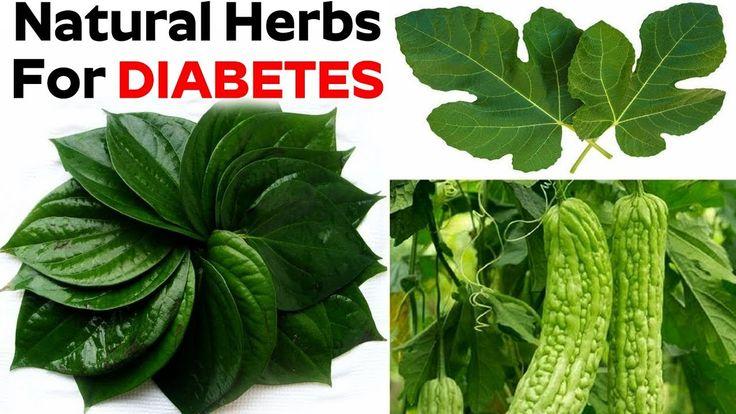Natural Herbs For Diabetes | Top 5 Natural Herbs For Diabetes