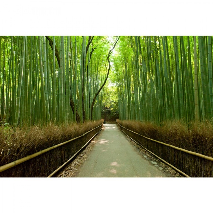 17 best images about wall mural on pinterest wall murals for Bamboo wall mural