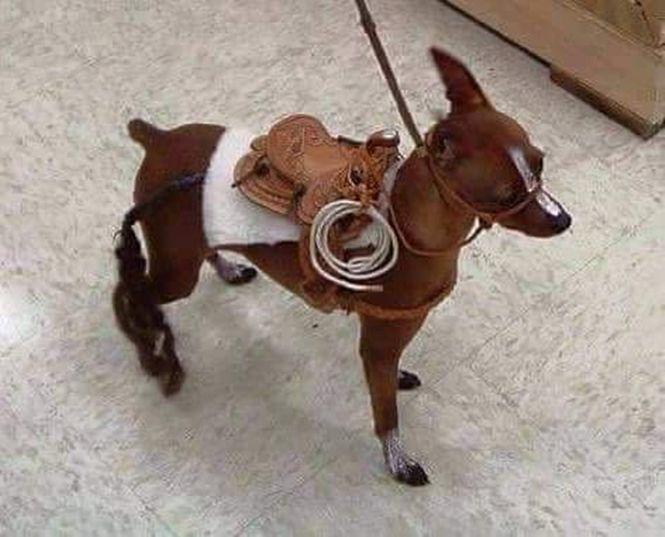 """""""Vende- se esse Cavalo da _Raça quarto de Milha_ Sangue Puro, Valor _R$15.000_ ou troco em uma _Saveiro_…*  Vai ter gente falando que é um cachorro por favor quem nao quiser comprar nao atrapalhem minha venda"""""""