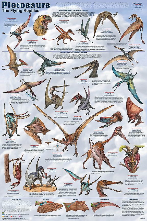 "Same Artist as ""Dapper Dinosaurs."" Note that Pterosaurs and Dinosaurs were two totally Different classes of Reptiles. (Although, one group of the Latter did become our Birds of today.)"