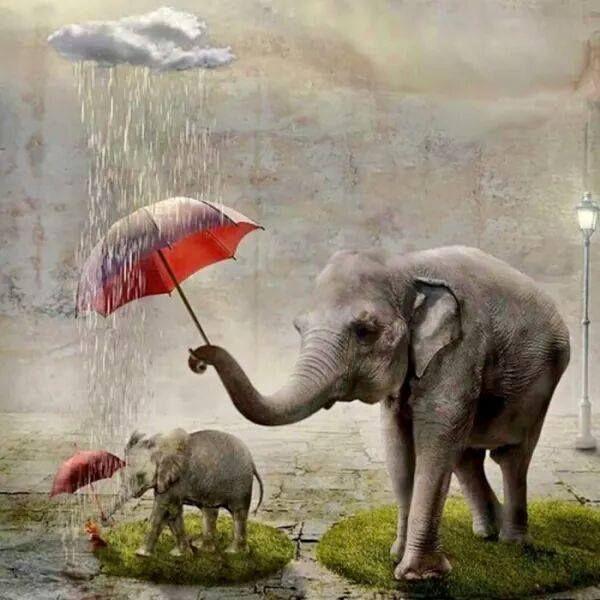 """Post  #: """"Sê gentil sempre que for possível.  É sempre poss..."""