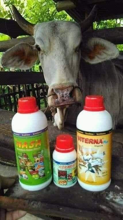 Vitamin Ternak Organik Untuk Penggemukan Sapi Babi Kambing Kuda