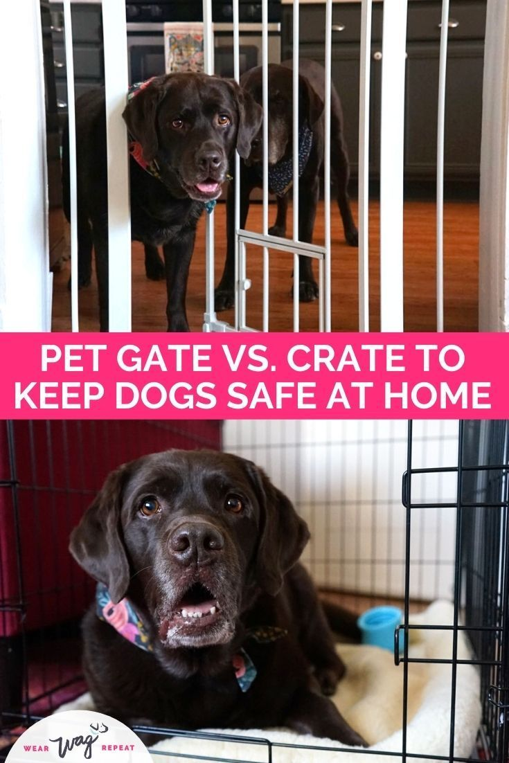 Keeping My Dogs Safe At Home Pet Gate Vs Crate Wear Wag Repeat In 2021 Dog Safe Pet Crate Pet Gate