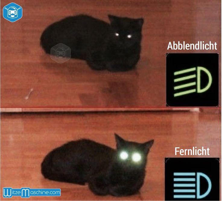 Leuchtende Katzenaugen bei Nacht- Unterschid von Abblendlicht und Fernlicht