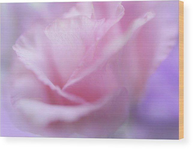 Jenny Rainbow Fine Art Photography Wood Print featuring the photograph Le Baiser Rose by Jenny Rainbow