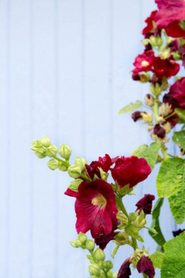Fabulous Plants For A Cottage Garden Cut Flower Garden Cottage Download Free Architecture Designs Viewormadebymaigaardcom