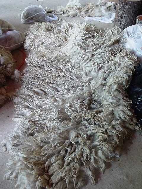 Raw lincoln longwool fleece by Modern Fiber Lab - Sonya Yong James, via Flickr