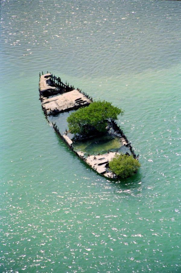 "Boca Grande Wreck"" located four miles north of Boca Grande Key, Florida.  Nature will find a way :)"