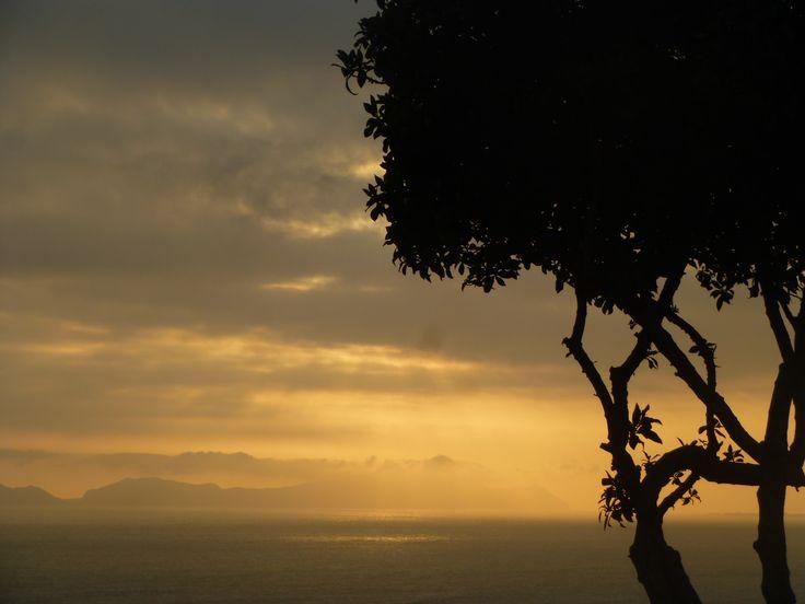 4 y 54 pm. Ya podemos observar que la luz del sol forma una sombra con el árbol. #natural