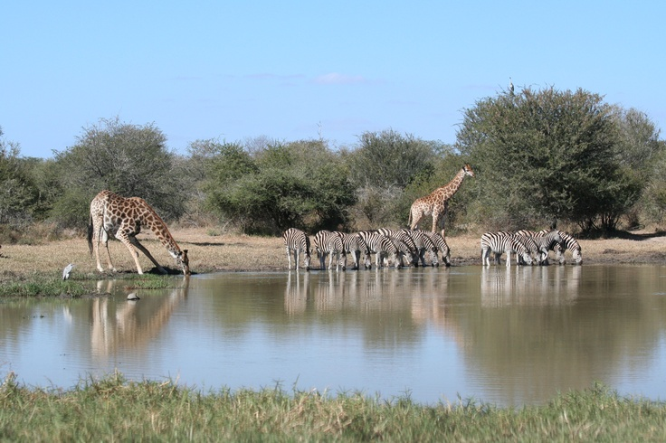 The picture changes a 100 times at a water hole in the Kruger Park.