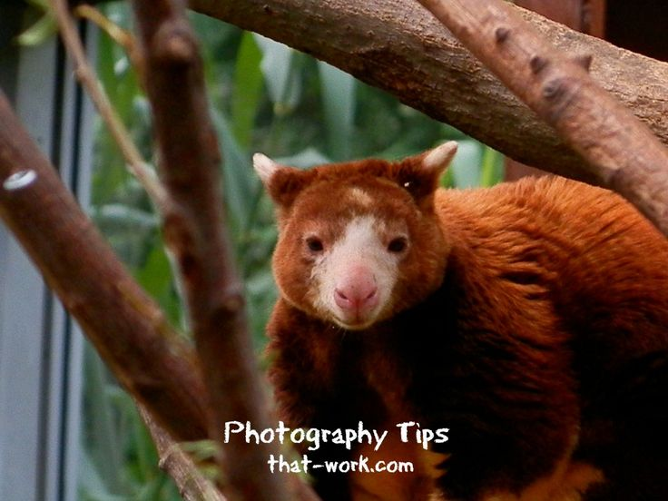 Zoo Photographyhttp://www.photography-tips-that-work.com/zoo-zoo-photography.html