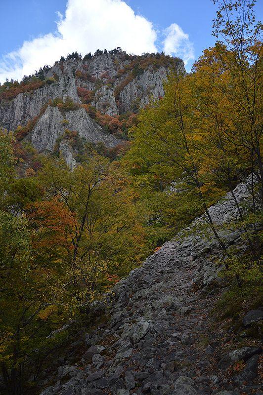 Virgin Forest of Frakto ~ Drama, Greece