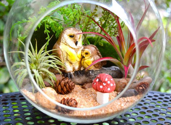 Owl Terrarium Kit  Owl and baby owl on a by BeachCottageBoutique