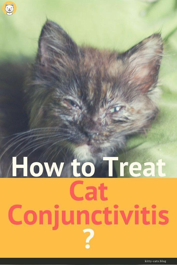 How To Treat Cat Conjutivitis Kitten Eyes Cat Care Cats