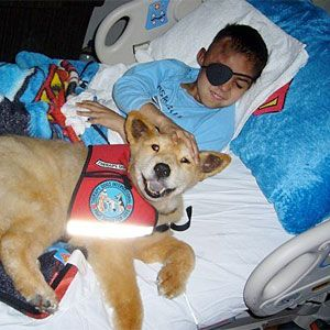 """""""As an end-of-life therapy dog doing highly sensitive and compassionate work, Baxter comforted those who lay dying and in pain, helping them on their transition from life to death, sometimes in their very last hours."""""""