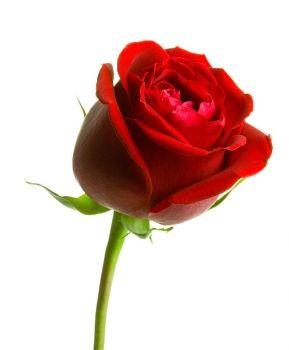 e-Liquid mit Rosengeschmack  Am 14. Februar ist Valentinstag. Möchten Sie Ihrer Liebsten oder Ihrem Partner in diesem Jahr ein ganz besonderes Valentinsgeschenk schenken?