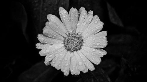 black - white  http://garsc-slow.tumblr.com/post/42091561123/czarne-biale