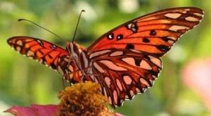 Un equipo de científicos ha analizado 192 estudios para evaluar los efectos de la pérdida de biodiversidad y otros factores ambientales en la productividad de los ecosistemas. + ifno: http://www.ecoapuntes.com.ar/2012/05/el-impacto-de-la-perdida-de-biodiversidad-es-comparable-al-del-cambio-climatico/