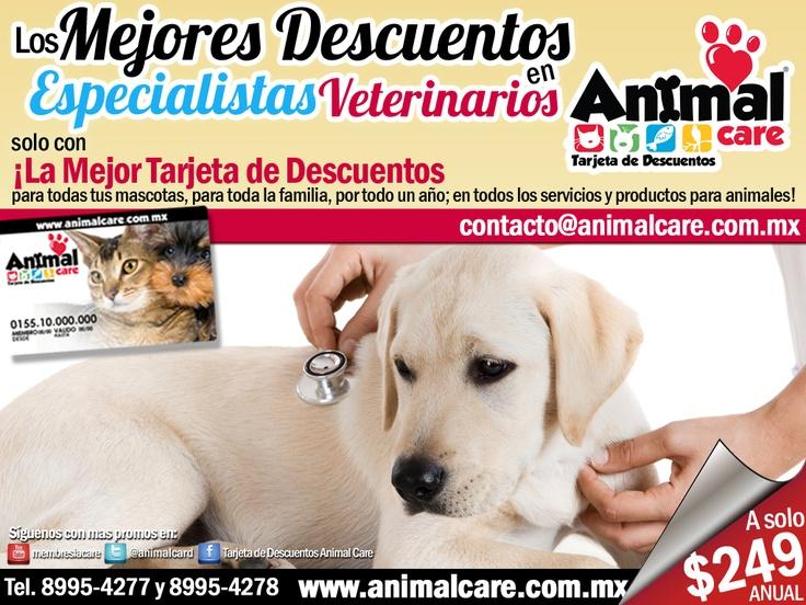 EN ESPECIALIDADES VETERINARIAS al presentar la TARJETA DE DESCUENTOS ANIMAL CARE obtienes los mejores descuentos del 10% al 50% en todos los servicios y productos para mascotas, con toda la RED de PROVEEDORES. Checa todos los descuentos en www.animalcare.co... Llámanos al 8995-4277 y 8995-4278 Escribenos a contacto@animalcare.com.mx