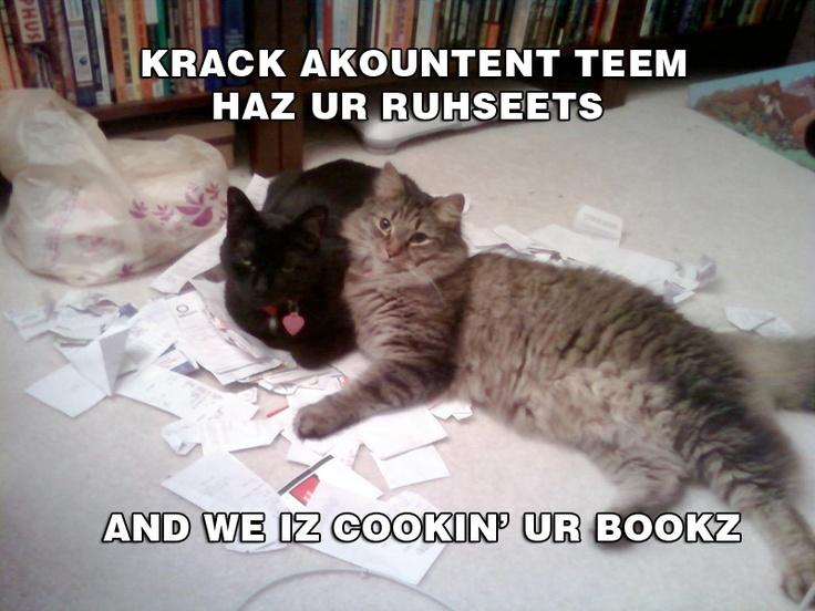 Cat Captions Pictures