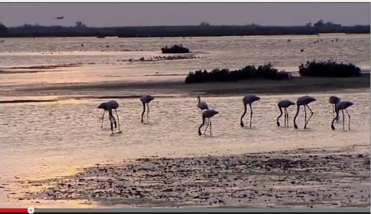 La Camargue est une zone humide emblématique du sud de la France, mais l'eau salée de la mer la menace.