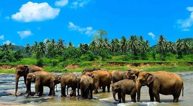 Most Beautiful Places To Visit In Sri Lanka Pinnawala Elephant Orphanage Sri Lanka Pinterest