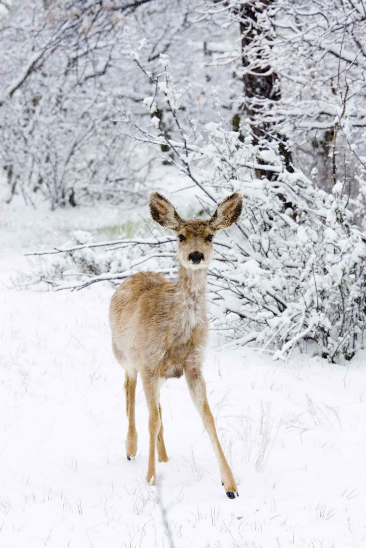 A doe in snow                                                                                                                                                     More