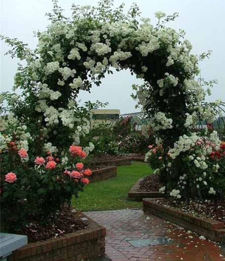 Roses for Beautiful Outdoor Decor, Charming Garden Designs and Backyard Ideas-I would love to wander through these gardens!
