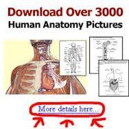 Medical AHIMA-CCS exam dumps - killexams.com