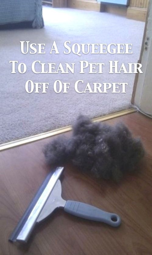 Changing my rug's life in one picture.