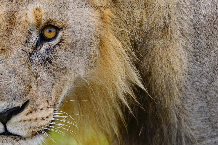 Five tips for photographing wildlife